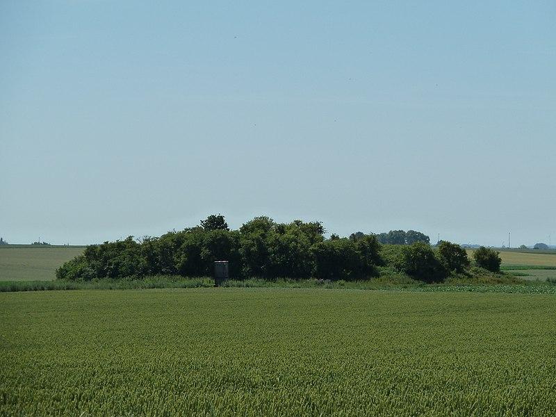 Tumulus de Waasmont, Landen, Belgique