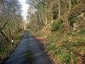 Lane at Garden House Wood - geograph.org.uk - 1176780.jpg