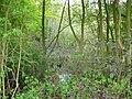 Langenfeld Nähe Haus Graven 0003.jpg