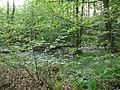 Langenfeld Nähe Haus Graven 0024.jpg