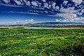 Las Tablas de Daimiel grassland.jpg