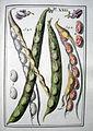 LeBerryais Haricots planche 23.jpg