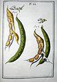 LeBerryais Haricots planche 40.jpg