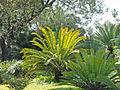 Le Jardin botanique de Palerme (7042403361).jpg