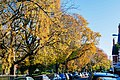 Leaves of Cardiff DSC 3862 (15729832070).jpg