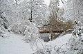 Lebenswertes chemnitz winter stadtpark schneebruch holz bruecke 2.jpg