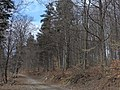 Lesom - panoramio (3).jpg