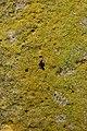 Lichen (40872557654).jpg