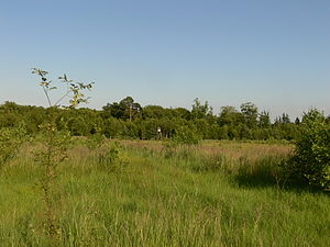 Rostock Heath - Overgrown firing range of Wiethagen