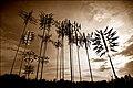 Lift your skinny antennas to heaven - Flickr - izarbeltza.jpg
