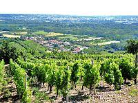 Limony vue générale vignes (2).jpg