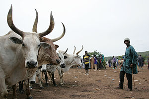 Pastoralism - Livestock market in Mali.