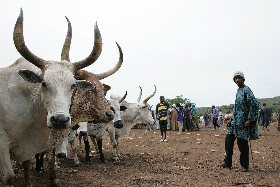 Livestock market in Mali
