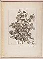 Livre de Toutes Sortes De Fleurs D'apres Nature MET DP210742.jpg