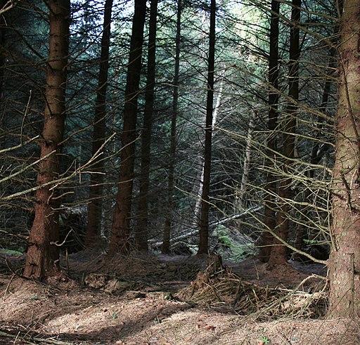 Llandegla Forest - geograph.org.uk - 1219387