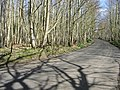 Looking NE along road through Trenley Park Woods - geograph.org.uk - 369453.jpg