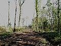 Lough Owel Woodland - geograph.org.uk - 1005769.jpg