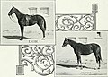 Lovers of the horse - brief sketches of men and women of the Dominion of Canada devoted to the noblest of animals. - (1909) (14579173888).jpg