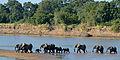 Loxodonta africana South Luangwa National Park (2).jpg