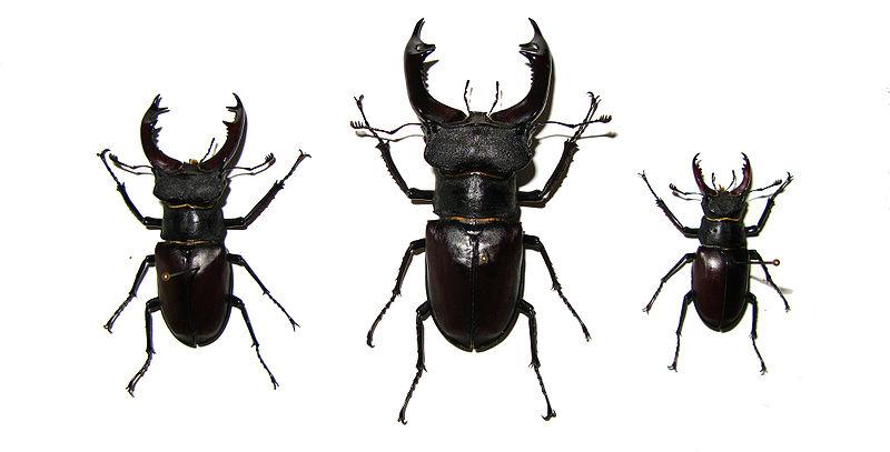 Фото крупным планом полового органа оленя самца фото 608-859