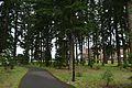 Lyle Hatfield Trail (Springfield, Oregon).jpg