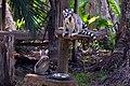 MG-naturpark-lemuren-1.jpg