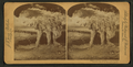 Mammoth Cave of Kentucky, from Robert N. Dennis collection of stereoscopic views.png