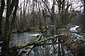 Marais de Bidonne (moorland with wooden bridge path) at Divonne-les-Bains - panoramio.jpg