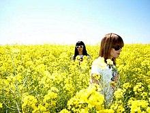 Photographie des deux membres du duo Marsheaux dans un champ de colza
