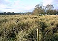 Marshland by Castle Loch - geograph.org.uk - 99995.jpg