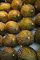 Melones - Piel de sapo.jpg