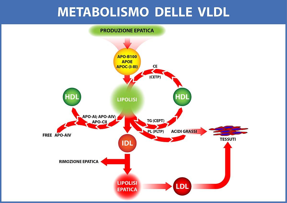 Aprender cómo curé mi dieta metabolismo acelerado haylie pomroy