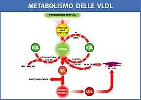 Dieta para cambiar metabolismo 13 dias