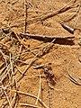 Metal Ant.jpg
