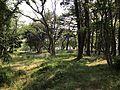 Miwadai Central Park 20170528.jpg