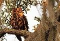 Mom S Above The Nest (246305553).jpeg