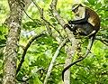 Mona Monkey 3.jpg