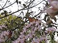 Monarchs on Asters (398974743).jpg