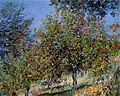 Monet - apple-trees-on-the-chantemesle-hill(1).jpg