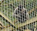 Monkey Sanctuary 2.jpg