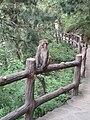 Monkeys at Shuangtashan (28154975803).jpg