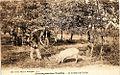 Montagnac trufficulteur et son cochon.jpg