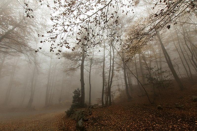 File:Montseny tardor.jpg