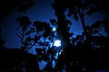 Moon shining through silhouette trees.jpg