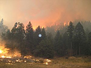 Moonlight Fire - Ground to crown flame spread. USFS photo
