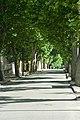 Mormoiron rue ombragée de platanes.jpg