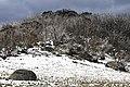 Mount Buffalo N.P. 22.jpg