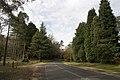 Mount Wilson NSW 2786, Australia - panoramio (23).jpg