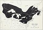 Munns (1938) 012 Pinus resinosa.jpg