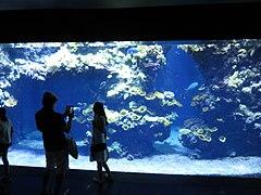 Musée océano Monaco 071.jpg